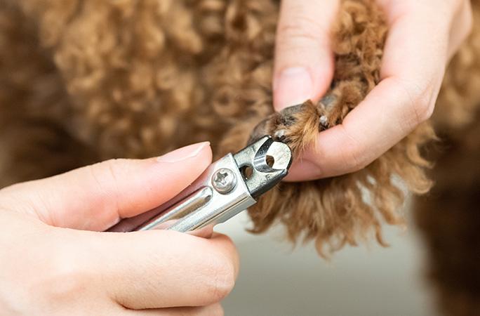 犬の爪切りの必要性と注意点